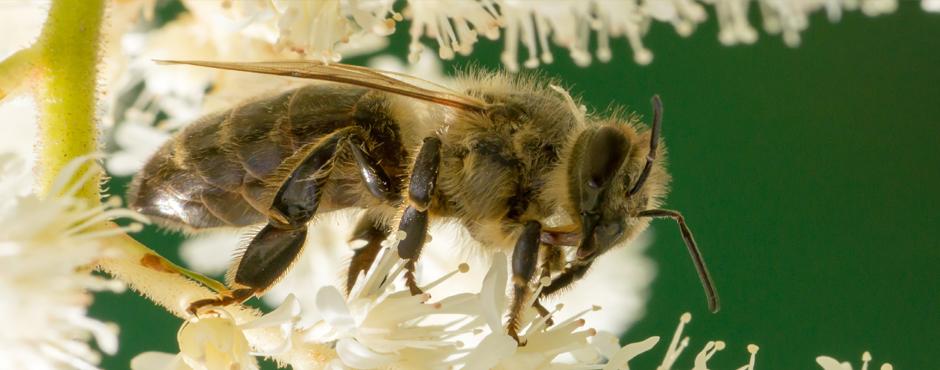 Honig etiketten selbst gestalten